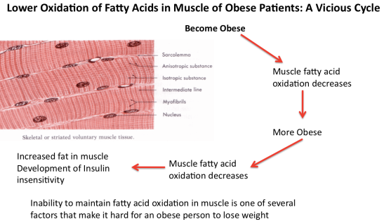 Muscle fatty acid oxidation in obesity