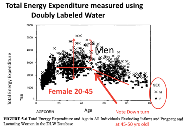 Pic 5 Total Energy Expenditure