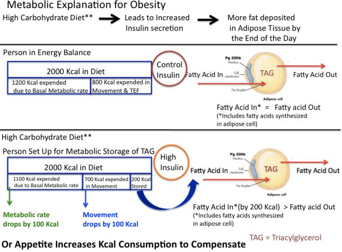 Pic 7 Metabolic Cuase