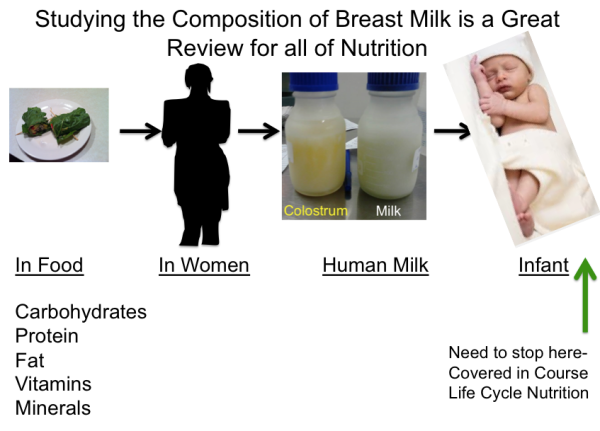 Studying Breast Milk is a Great Review for All Nutrition