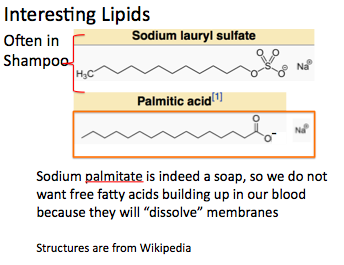 Palmitate and Sodium Lauryl Sulfate